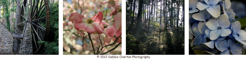  2012 Debbie Overton Photography ~ Nature Inspired