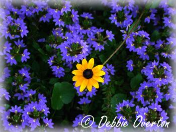 ©2011 Debbie Overton Photography